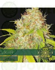 AK-49 Auto Vision Seeds
