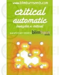 Critical Automatic 3 Semillas (Blim Burn Seeds)