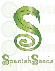 Auto Critical x Auto Haze (Spanish Seeds) Semilla Feminizada Autofloreciente Cannabis
