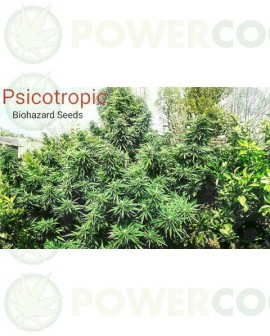 Psicotropic  Biohazard Seeds