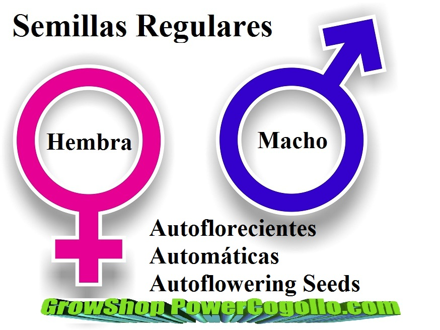 Semillas Autofloración Regulares