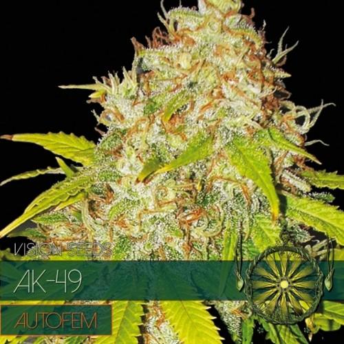 AK-49 Auto Vision Seeds  3