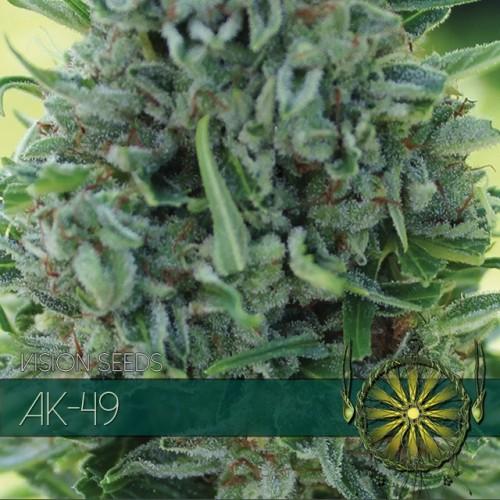 AK-49 (Vision Seeds) Semilla feminizada 2