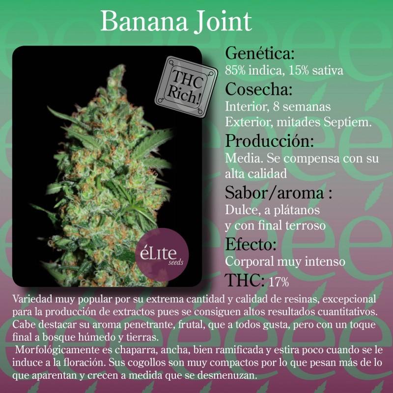 Banana Joint (Elite Seeds) Semilla Feminizada 1