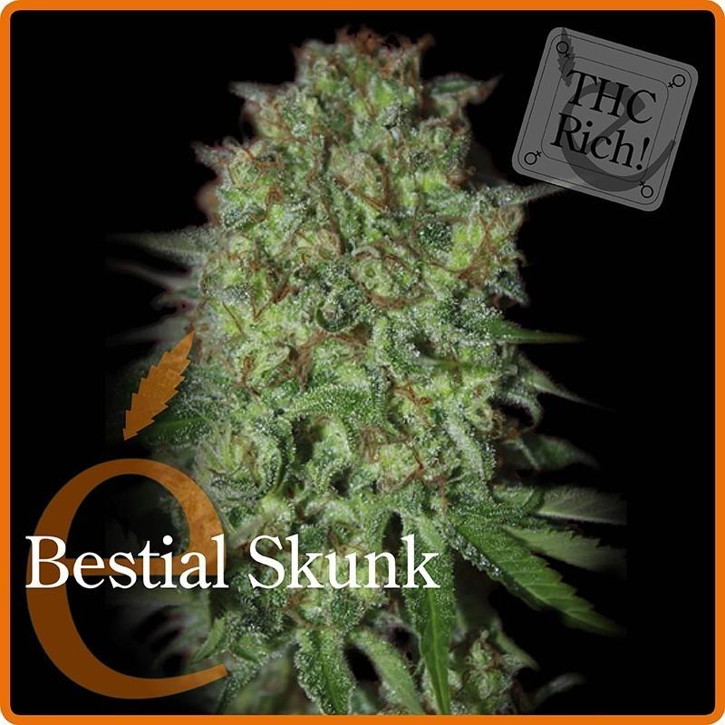 Bestial Skunk (Elite Seeds) Semilla  1