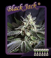 Black Jack (Sweet Seeds) Feminizada 0