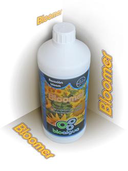 Bloomer 0