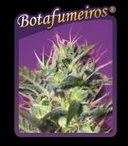 Botafumeiros (Sweet Seeds) 0