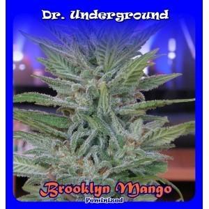 Brooklyn Mango (Dr. Underground Seeds) Semillas Feminizadas Cannabis-Marihuana 0