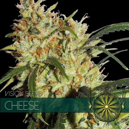 Cheese (Vision Seeds) Semilla Feminizada 2