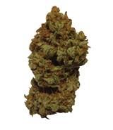 Lili (Mano Verde Seeds) Semilla Feminiza Cannabis-Marihuana 1