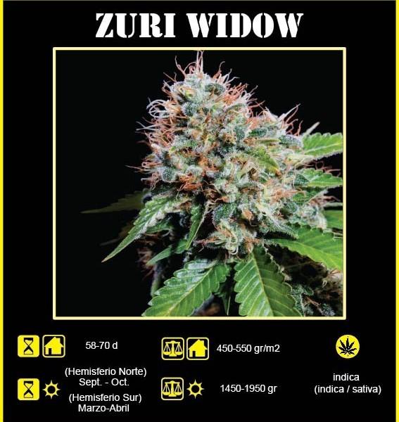 Zuri Widow 1