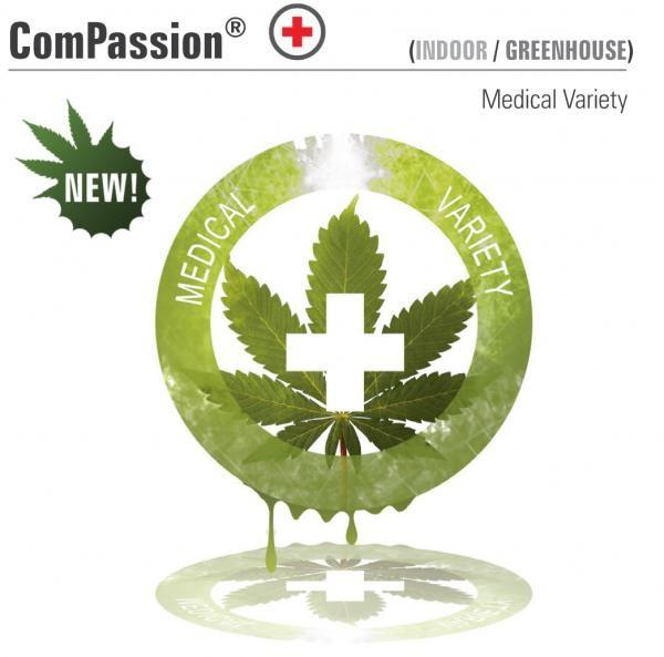 CBD ComPassion  (Dutch Passion) Semilla Feminizada de Cannabis 0