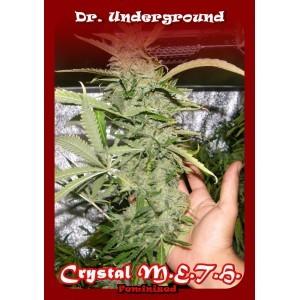crystal-meth-dr-underground-seeds 0