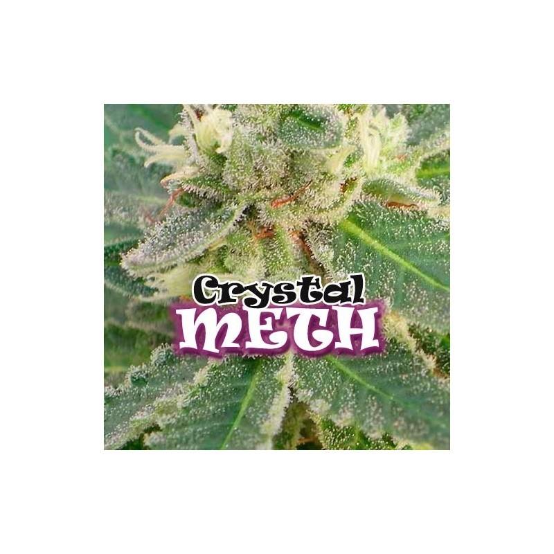 crystal-meth-dr-underground-seeds 1