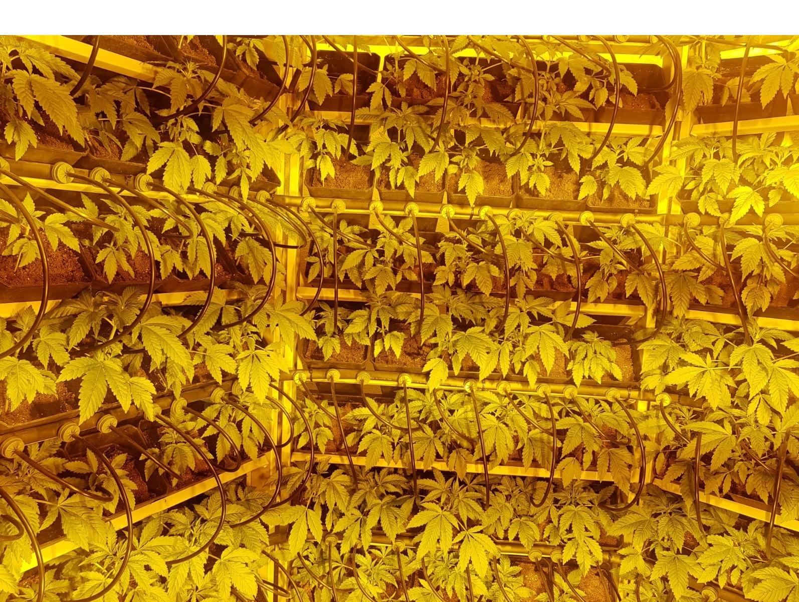 Cultivo Vertical Hidropónico 400 Plantas 10