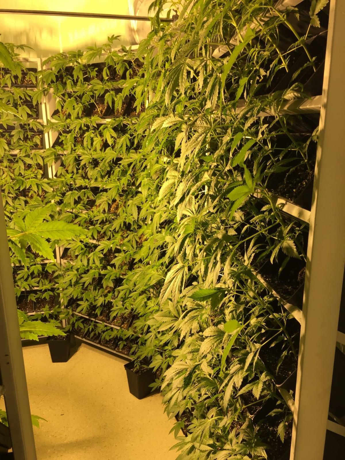 Cultivo Vertical Hidropónico 400 Plantas 9
