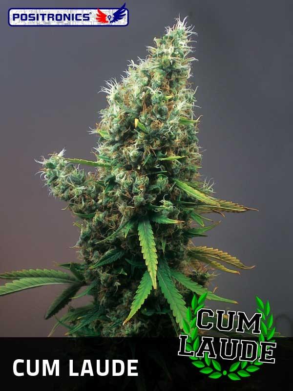 Cum Laude (Positronics Seeds) 0
