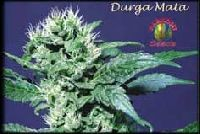 Durga Mata Regular 0