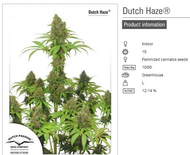 Dutch Haze (Dutch Passion Seeds) 2