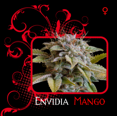 Envidia Mango 0