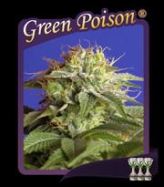 Green Poison (Sweet Seeds) Feminizada 0