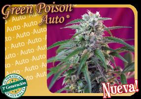 Green Poison Auto (Sweet Seeds) 0