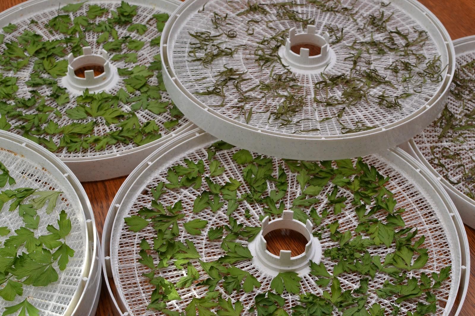Deshidratadora Digital Secador rápido cosecha 0