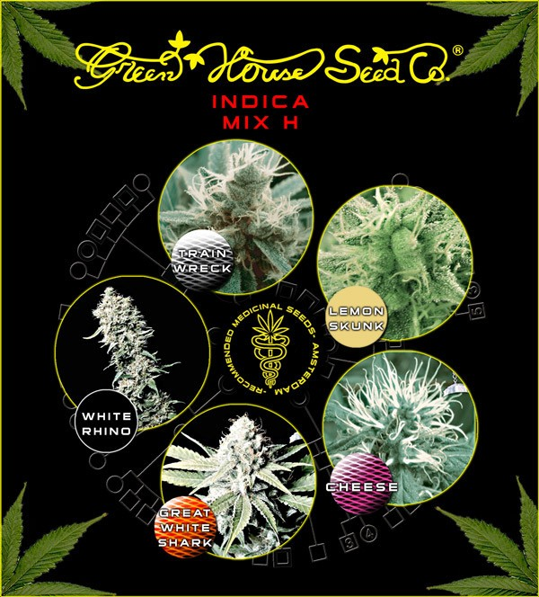 Indica Mix H (Green House Seeds) 1