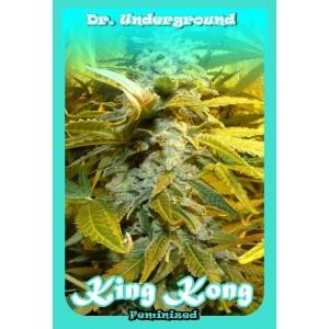 King Kong (Dr. Underground Seeds) Semilla Feminizada Cannabis - Marihuana 1