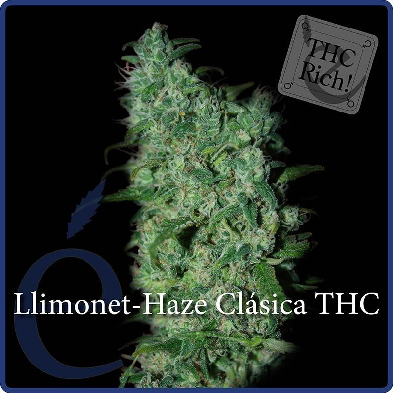 Llimonet Haze Feminizada (Elite Seeds) 1