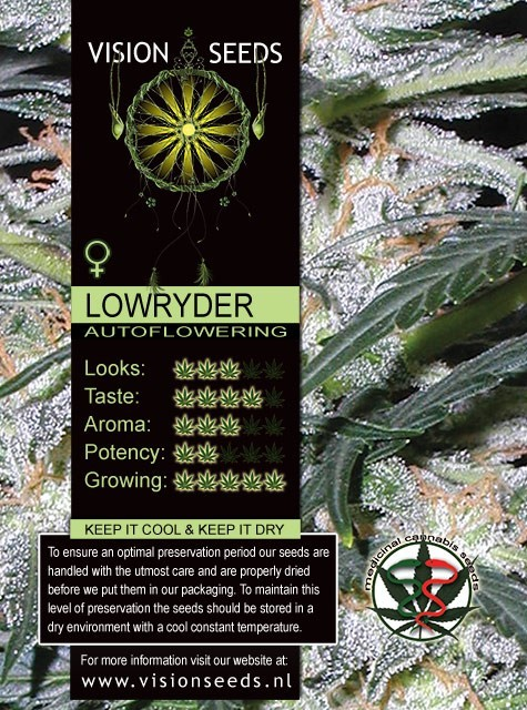 Lowryder Auto Vision Seeds 1