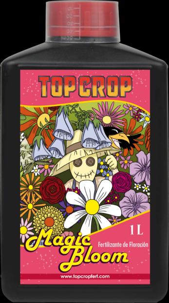 top bloom, top crop, floracion 1