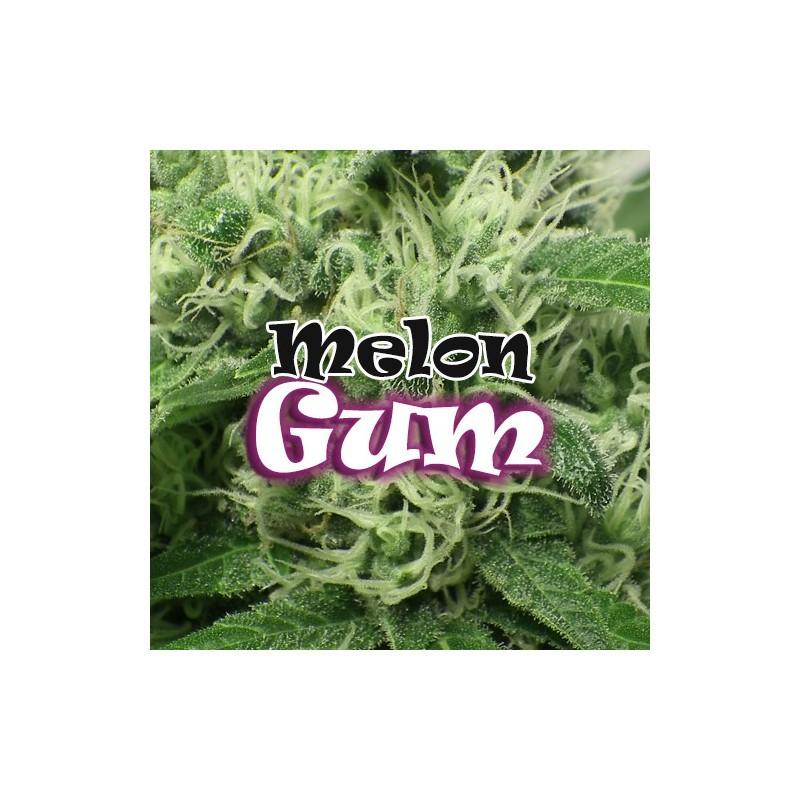 Melon Gum (Dr. Underground Seeds) 4