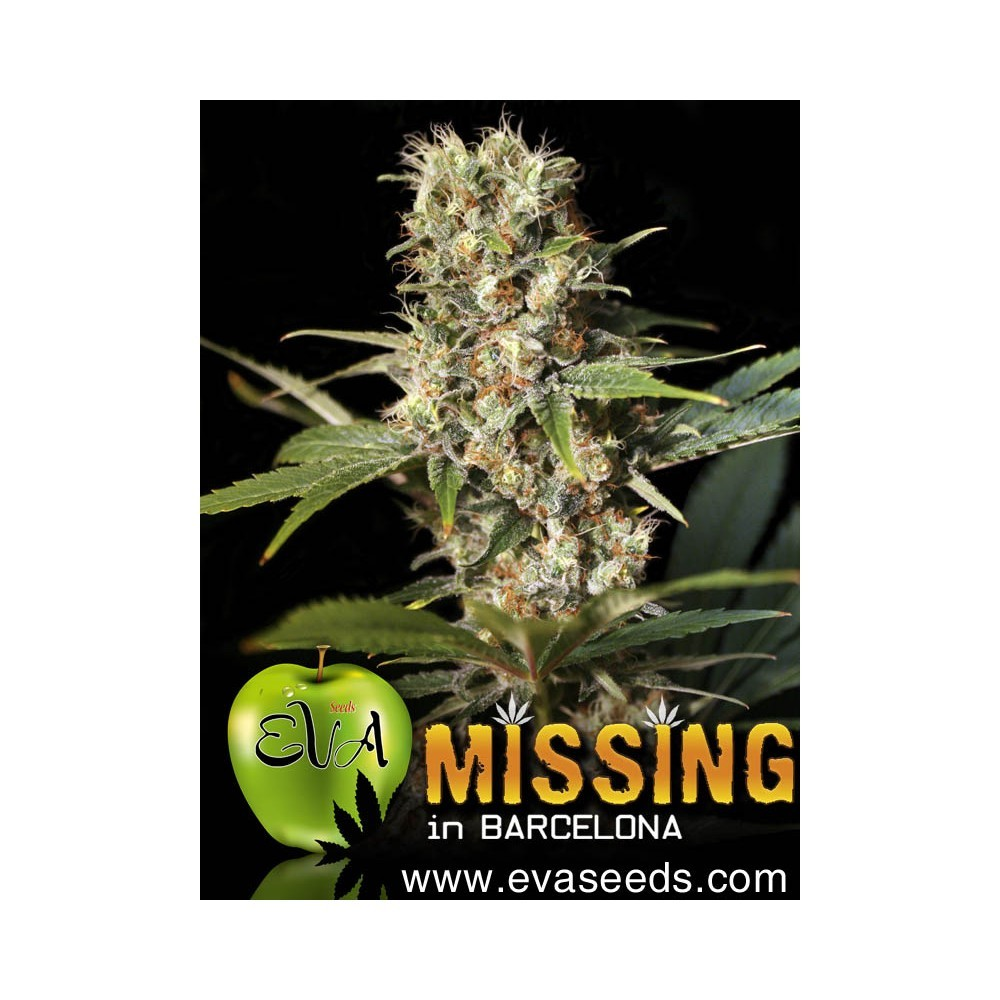 Missing in Barcelona (EVA SEEDS) 0