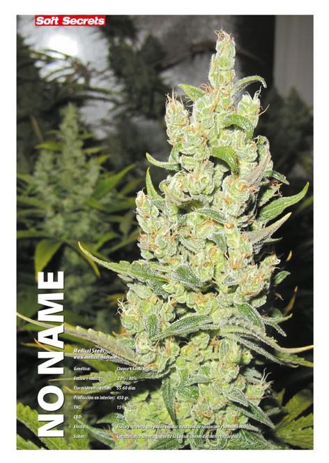 No Name (Medical Seeds) Feminizada marihuana 2