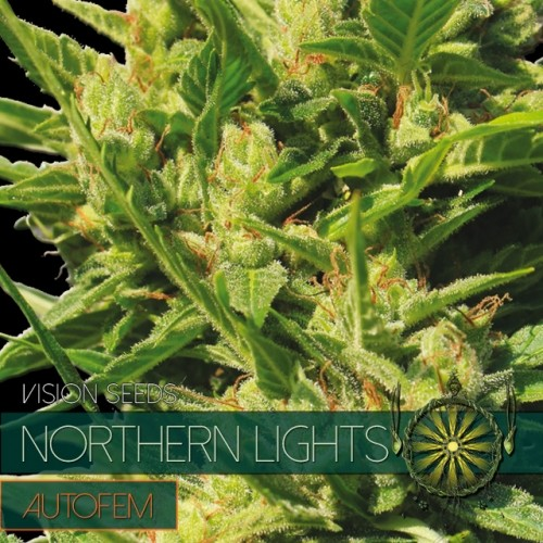 Northern Lights Auto Vision Seeds 3