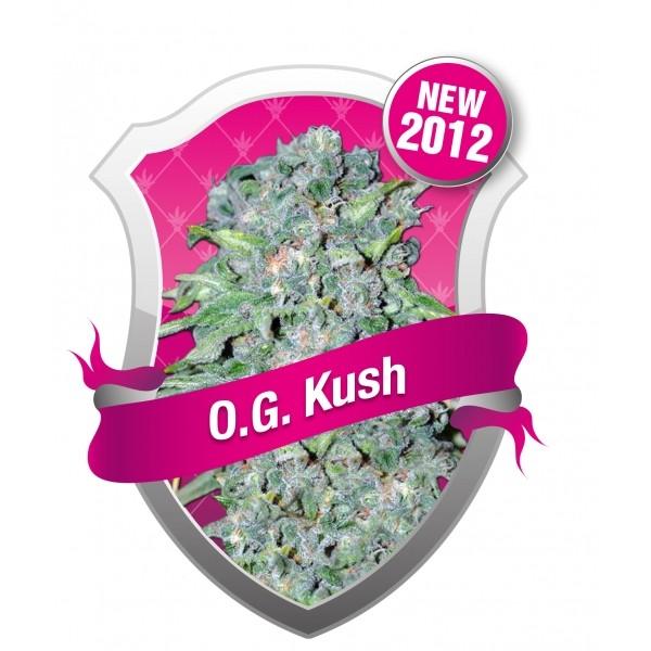 O.G. Kush (Royal Queen Seeds) Semilla cannabis Feminizada 1