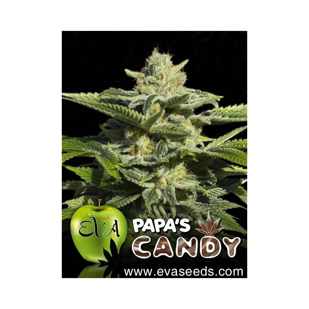 Papa´s Candy Feminizada (EVA SEEDS) 1
