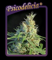 Psicodelicia Feminizada (Sweet Seeds)  0