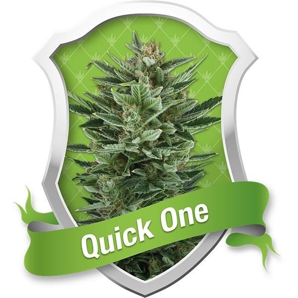 Quick One Autofloreciente 1