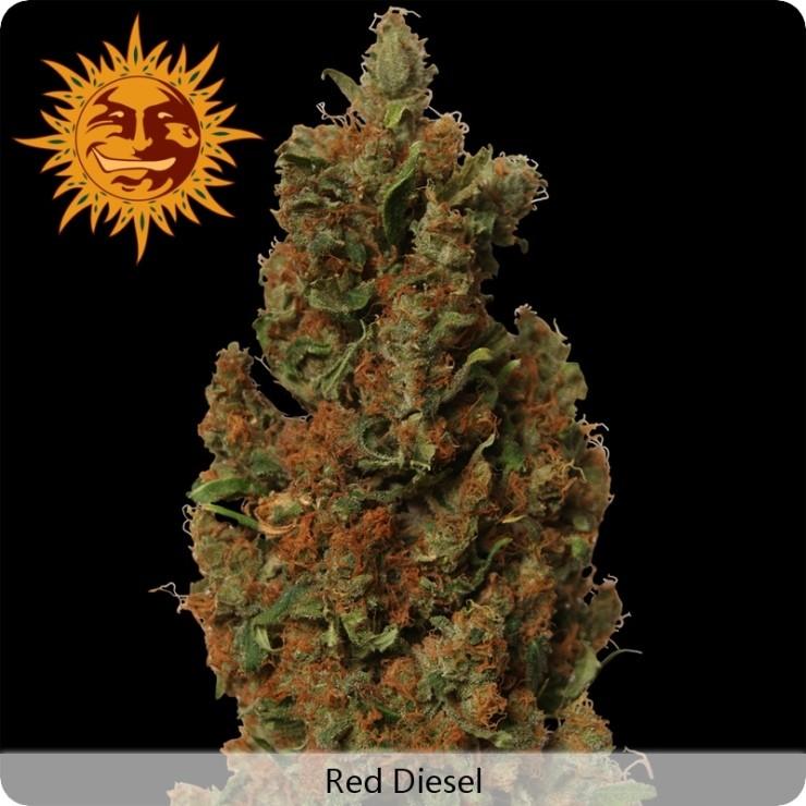 Red Diesel (Barney´s Farm Seeds) 0