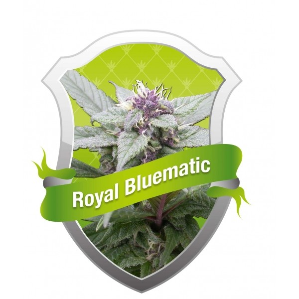 Royal Bluematic (Royal Queen Seeds) Semilla 0