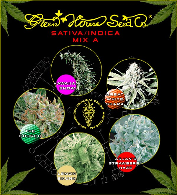 Sativa/Indica Mix B (Green House Seeds) 1