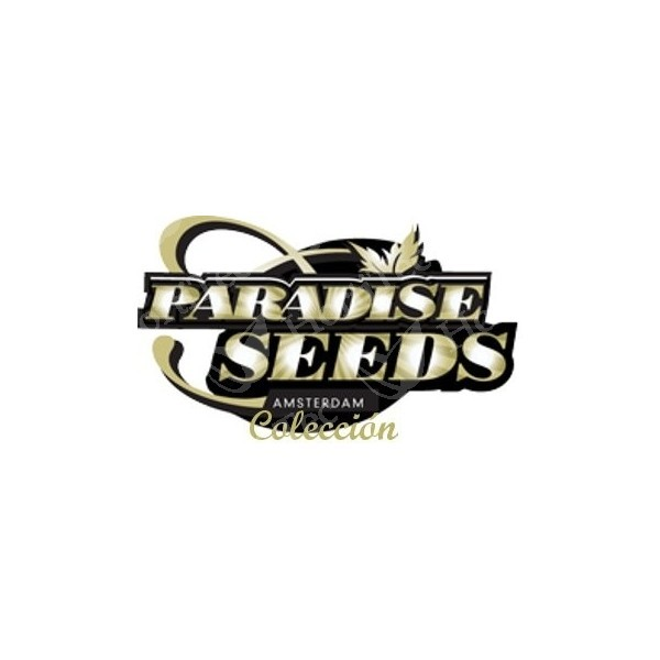 Indica Champions Pack (Paradise Seeds) 2