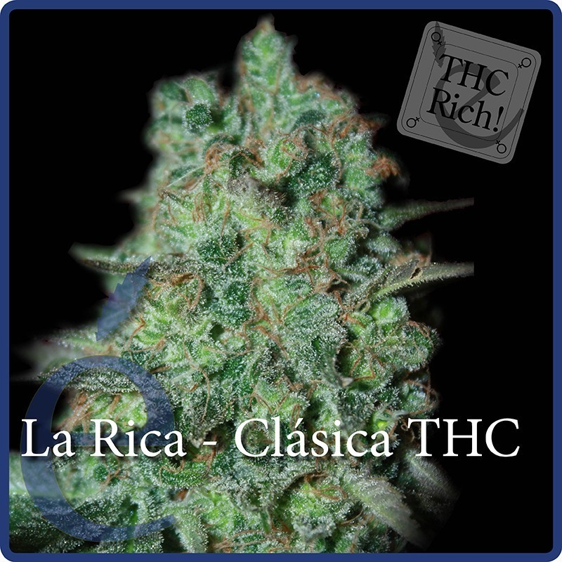 Semilla Feminizada La Rica (Elite Seeds)  1