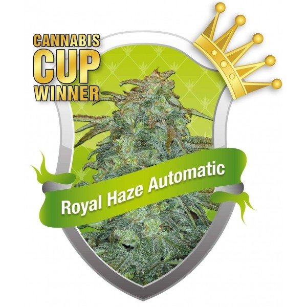 Semillas Royal Haze Automatic Feminizadas de Royal Queen Seeds 0