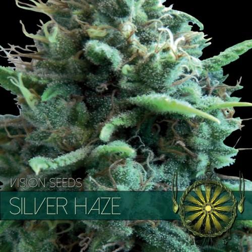 Silver Haze Vision Seeds  2
