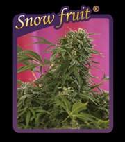 Snow Fruit  0
