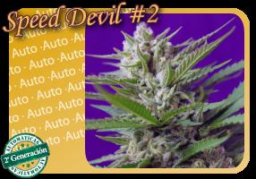 Speed Devil #2 Auto (Sweet Seeds) 0